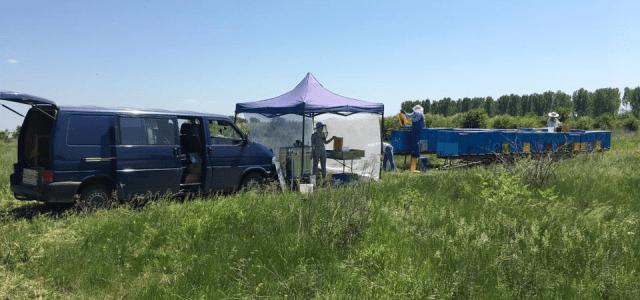 extractie miere pastoral