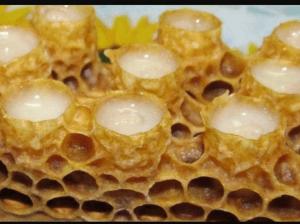 Celule cu laptisor de matca.